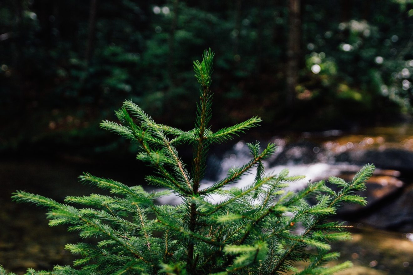 Top Tips for Creating Quality Evergreen Content